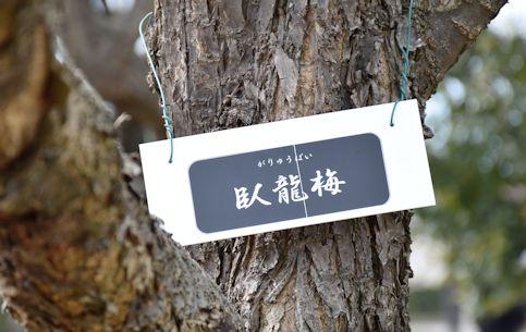 2017.3園芸センター梅16.jpg