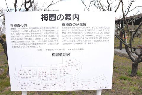 2017.3園芸センター梅2.jpg