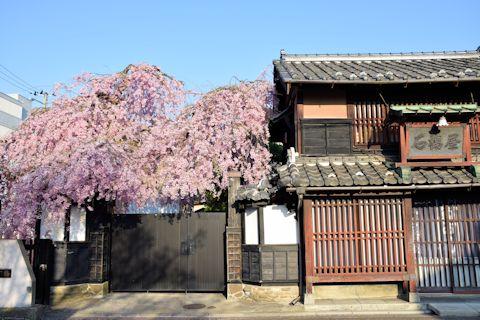 2017.4.16桜3.jpg
