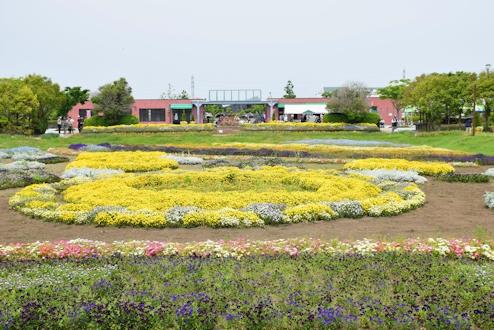 2017春のバラ13.jpg