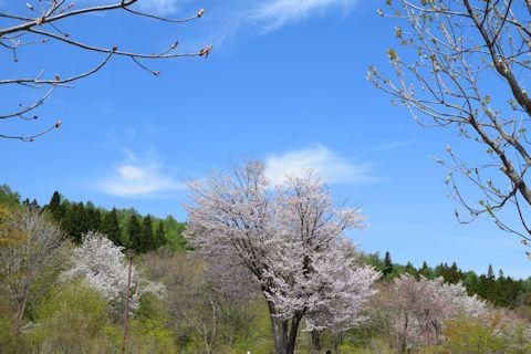 山形野草園9.jpg